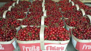 sour cherries with french baskets